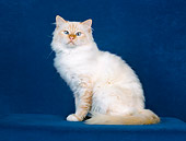 CAT 01 CH0033 01