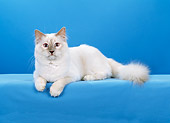 CAT 01 CH0034 01