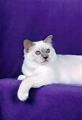 CAT 01 CH0035 01