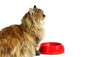 CAT 01 GL0005 01