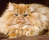 CAT 01 GL0006 01
