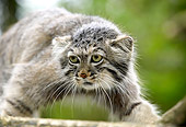 CAT 01 GL0008 01