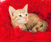 CAT 01 GL0009 01