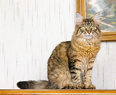 CAT 01 GL0010 01