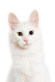 CAT 01 JE0001 01