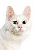CAT 01 JE0002 01