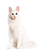 CAT 01 JE0003 01