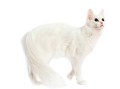 CAT 01 JE0004 01