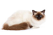 CAT 01 JE0005 01
