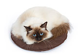 CAT 01 JE0006 01