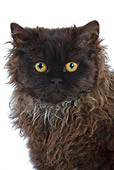 CAT 01 JE0010 01