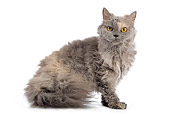 CAT 01 JE0011 01