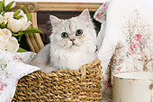 CAT 01 JE0014 01
