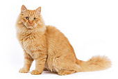 CAT 01 JE0020 01