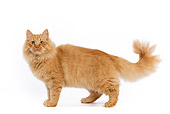 CAT 01 JE0021 01