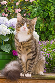CAT 01 JE0025 01