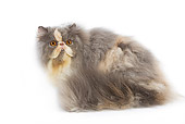 CAT 01 JE0027 01