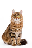 CAT 01 JE0033 01