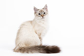 CAT 01 JE0034 01