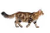CAT 01 JE0038 01