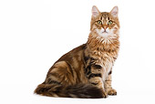CAT 01 JE0039 01