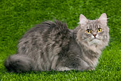 CAT 01 JE0044 01