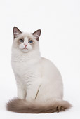 CAT 01 JE0049 01