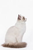 CAT 01 JE0051 01