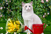 CAT 01 JE0052 01