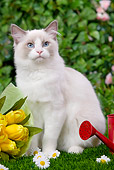 CAT 01 JE0053 01