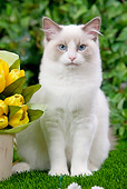 CAT 01 JE0054 01