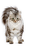 CAT 01 JE0057 01