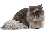 CAT 01 JE0058 01