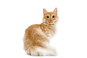 CAT 01 JE0059 01