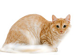 CAT 01 JE0060 01