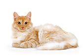 CAT 01 JE0061 01