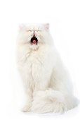 CAT 01 JE0064 01