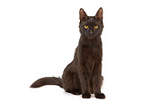 CAT 01 JE0070 01