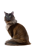 CAT 01 JE0072 01