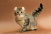 CAT 01 JE0075 01