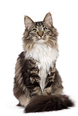 CAT 01 JE0081 01