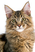 CAT 01 JE0083 01