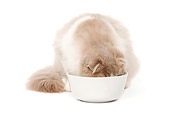 CAT 01 JE0087 01