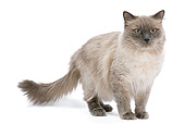 CAT 01 JE0095 01