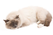 CAT 01 JE0099 01