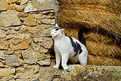 CAT 01 JE0100 01