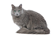 CAT 01 JE0101 01