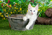 CAT 01 JE0103 01