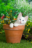 CAT 01 JE0104 01
