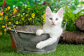 CAT 01 JE0105 01